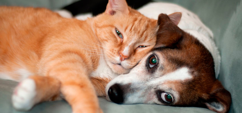 an analysis of cats and dogs in the life of person Science demonstrates that both cats and dogs can provide health and social benefits to humans - and both cat owners and dog owners are quick to tell you how much their preferred pet improves their happiness and quality of life.